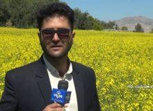 خبرنگاران فراموش شدگان نبرد با کرونا/خبرنگار صداوسیما در دهدشت به کرونا مبتلا شد(+تصاویر وفیلم )